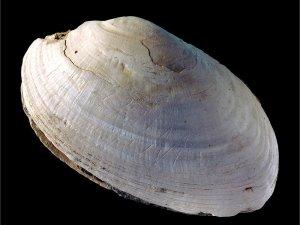 Java Zigzag Shell